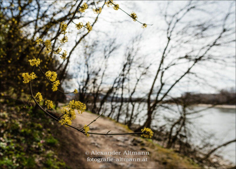 Read more about the article Donauauen im Frühling